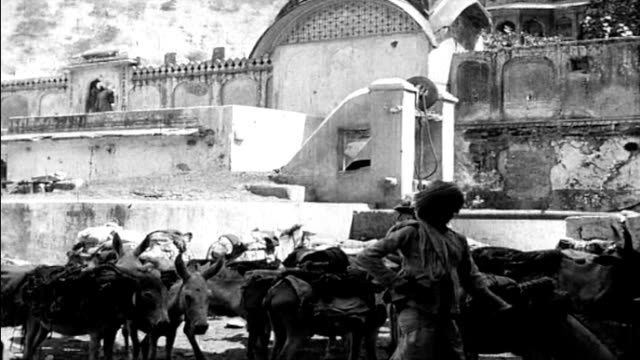 vidéos et rushes de 1925 india - man with pack of mules loaded with goods - coiffe traditionnelle