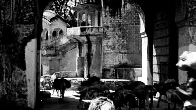 1925 india - mules led through streets - maultier stock-videos und b-roll-filmmaterial