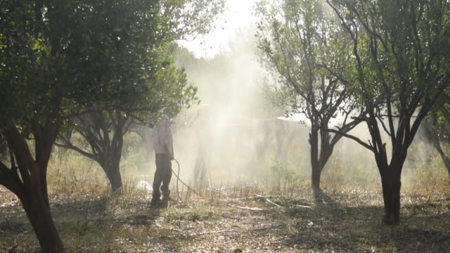 indian farmer spraying fertilizer on orange tree at orange field. - environmentalist stock videos & royalty-free footage