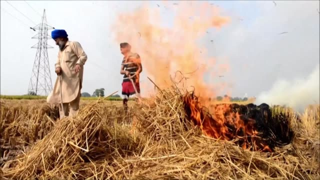 indian farmers burn crop stubble despite a ban causing a dip in air quality in many parts of delhi and surrounding cities - stubble stock videos & royalty-free footage