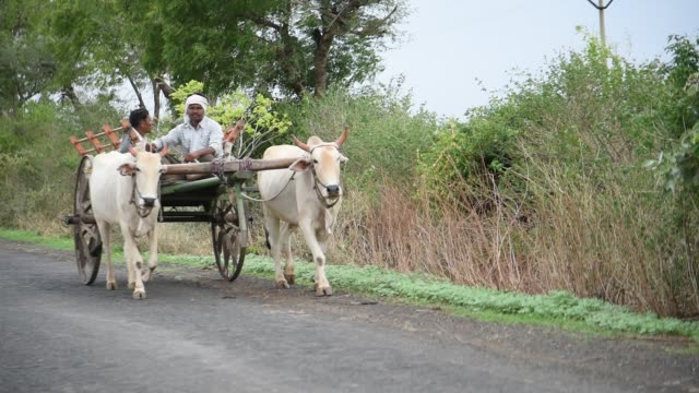 indian farmers with bull cart - cart stock videos & royalty-free footage