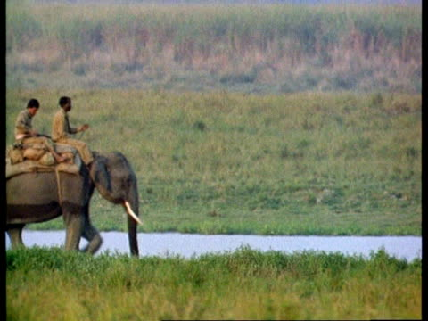 ms 2 indian men riding indian elephant along riverbank, india - auf dem rücken liegen stock-videos und b-roll-filmmaterial
