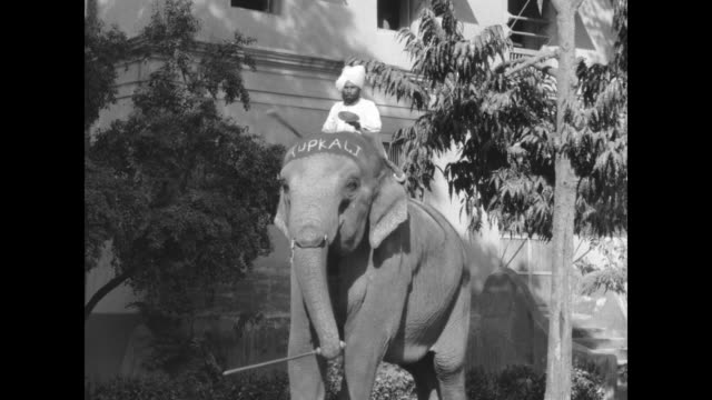 "vidéos et rushes de indian ruler's pet elephants in baroda bathing at water fountain, one has the name ""ramprasad"" written on his forehead, guard stands by with gun /... - sugar cane"