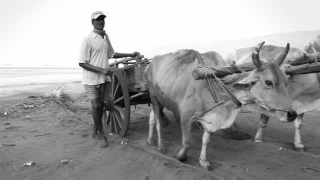 Indian ländlichen Mann mit seinem Bullock Einkaufswagen