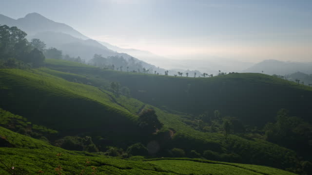 indian tea plantation in the morning mist, near munnar - hill stock videos & royalty-free footage