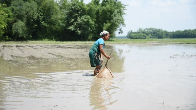 Indian tribal woman fishing with a traditional fishing instrument in a paddy field at Baghmara village some 135 KM from Guwahati in Baksa district of...