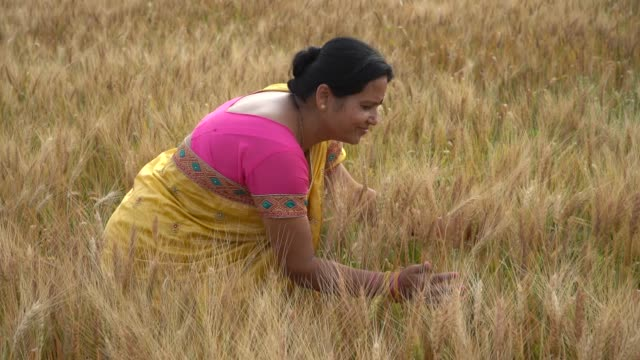 vidéos et rushes de indian woman enjoying in a wheat field. freedom concept. - indian ethnicity