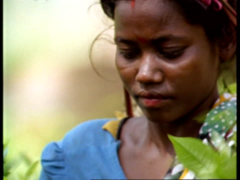 cu indian woman picking tea, india - indigenous culture stock videos & royalty-free footage
