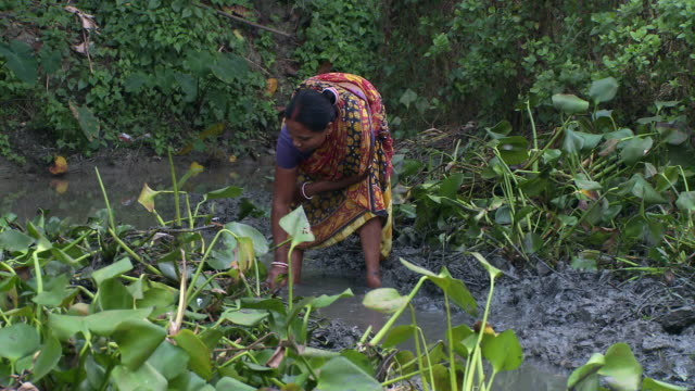 indian woman standing in muddy irrigation path. - taking a bath stock videos and b-roll footage