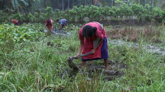 indian woman tilling a field by hand. - pflügen stock-videos und b-roll-filmmaterial