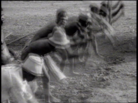 vidéos et rushes de indigenous african males using pick axes on ground ws group of males tamping breaking up hard ground possibly for airstrip leveling africans colony... - colony
