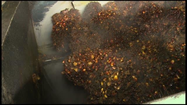 vídeos y material grabado en eventos de stock de indonesia palm oil mill on march 20 2013 in riau indonesia - isla de sumatra