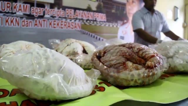 indonesian authorities seize more than 650 critically endangered pangolins found hidden in freezers - myrkotte bildbanksvideor och videomaterial från bakom kulisserna