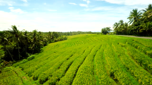 aerial indonesian countryside - rice terrace stock videos and b-roll footage