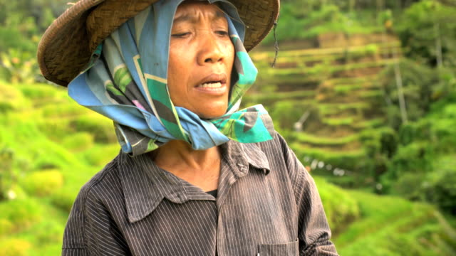 indonesian female worker picking rice from terraced field - bamboo plant stock-videos und b-roll-filmmaterial