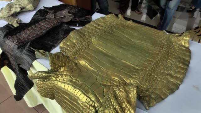 indonesian police officers seize rare animal skins at the office of national police headquarters in jakarta, indonesia on february 02, 2016.... - wildlife stock videos & royalty-free footage