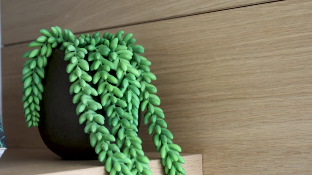 屋内ファーン オン 木製シェルフ - ホームインテリア - 観葉植物点の映像素材/bロール