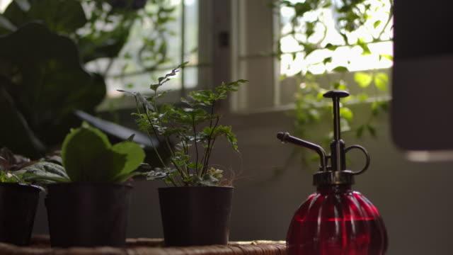 屋内庭園 - 観葉植物点の映像素材/bロール