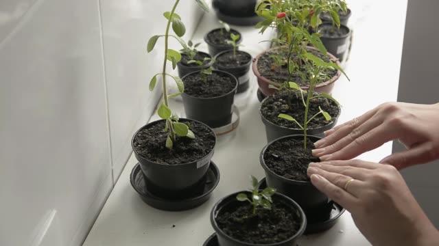 indoor gardening - plant pot stock videos & royalty-free footage