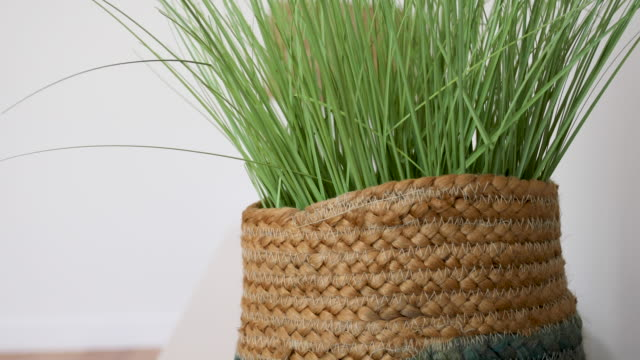 indoor plant in basket - home decor - wicker stock videos & royalty-free footage
