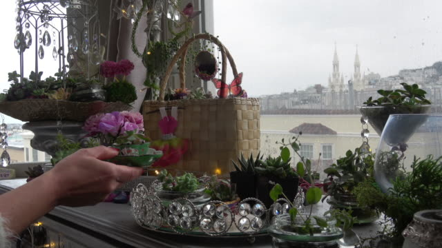 indoor succulent garden with a city view - succulent stock videos & royalty-free footage