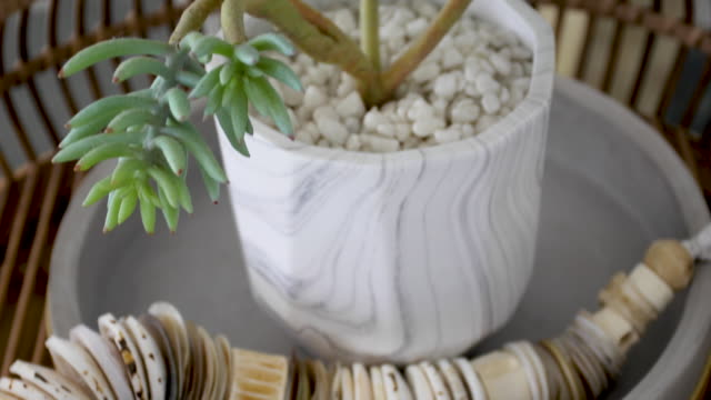 stockvideo's en b-roll-footage met indoor succulente planten op tafel-home decor - vetplant
