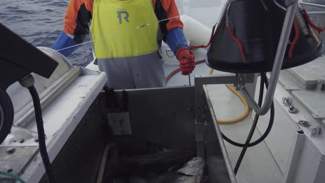 industrial arctic cod fishing in northern norway - 男漁師点の映像素材/bロール