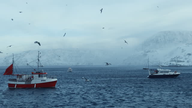 industrial arctic cod fishing in northern norway - fishing stock videos & royalty-free footage