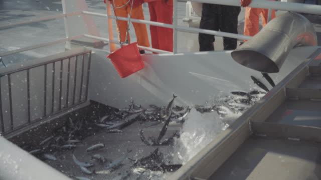 vídeos y material grabado en eventos de stock de barco de pesca industrial: gran captura de peces - red sea