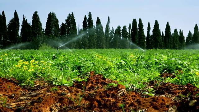 industrial watering - sprinkler stock videos and b-roll footage