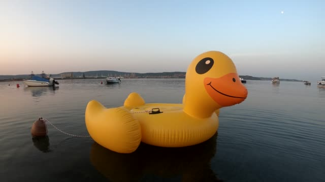 inflatable duck - inflatable stock videos & royalty-free footage