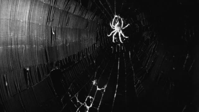vídeos de stock, filmes e b-roll de infrared ant struggles in spiders web. - encurralado
