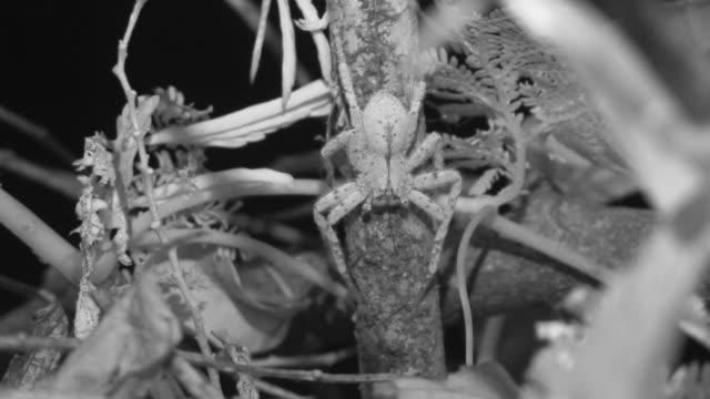 vídeos y material grabado en eventos de stock de infrared spider on branch. - java