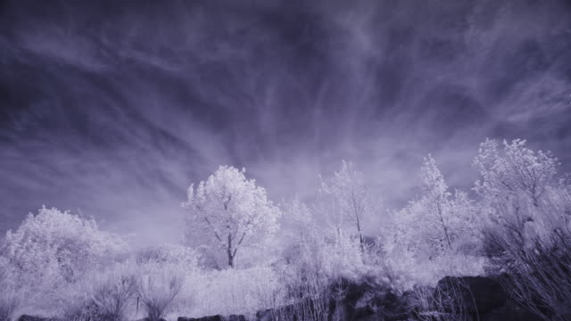 infrared time lapse of clouds passing over trees / lehi, utah, united states - lehi stock videos & royalty-free footage