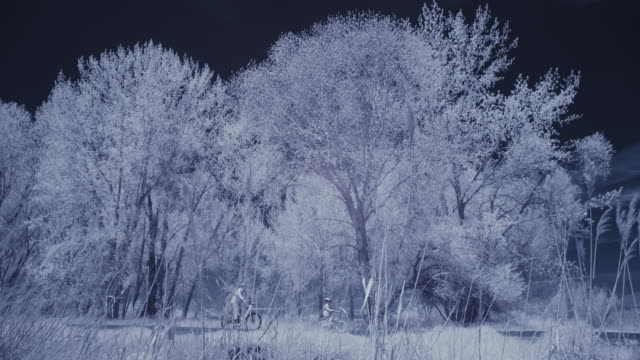 infrared view of distant people riding bicycles near trees / lehi, utah, united states - lehi stock videos & royalty-free footage