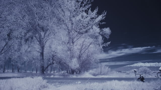 infrared view of people riding bicycles in park near trees / lehi, utah, united states - lehi stock videos & royalty-free footage