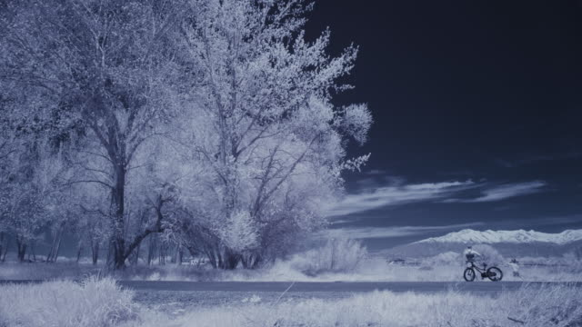 infrared view of person and dog with bicycle in park near trees / lehi, utah, united states - lehi stock videos & royalty-free footage