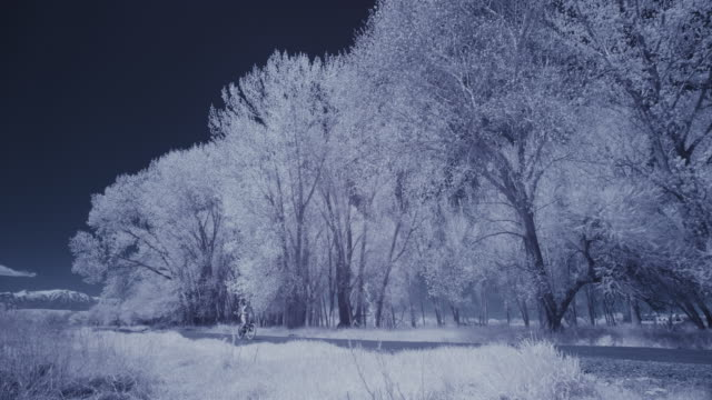 infrared view of person riding bicycle in park near trees / lehi, utah, united states - deep snow stock videos & royalty-free footage