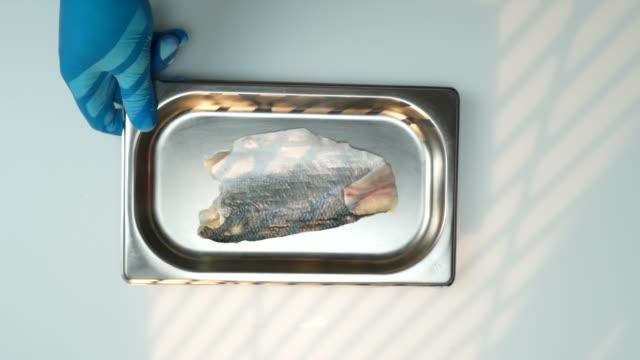 ingredients sea bass recipe - sea bass stock videos & royalty-free footage