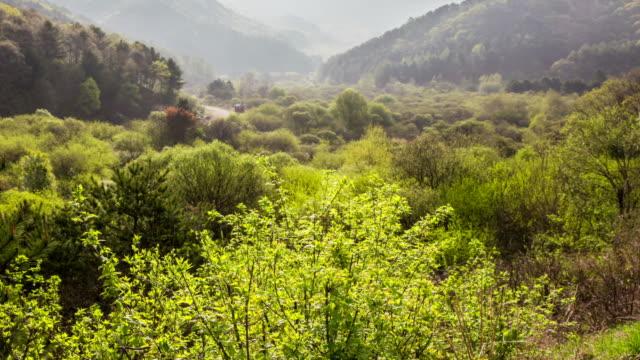inje secret garden / inje-gun, gangwon-do, south korea - エコツーリズム点の映像素材/bロール