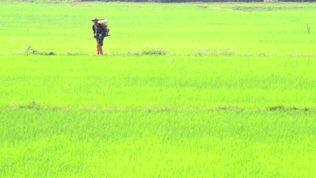 injecting farmer in the rice field - injecting stock videos and b-roll footage