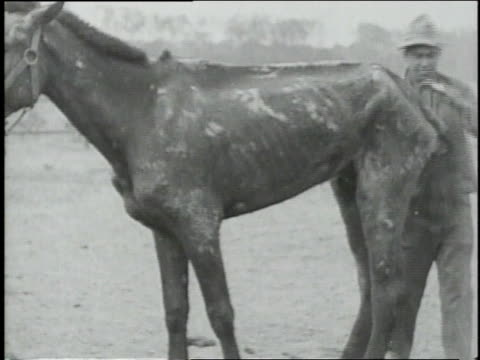 vidéos et rushes de injured horses standing in stalls - groupe moyen d'animaux