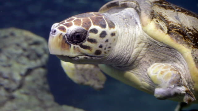 injured sea turtle - green turtle stock videos and b-roll footage