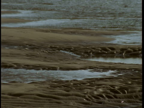 inlet waters fill gaps between wet, rippled sand. - inlet stock videos & royalty-free footage