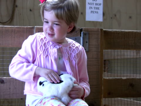 innocent unquestioning love - rabbit animal stock videos and b-roll footage