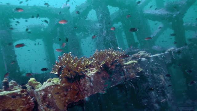 innovative environmental conservation underwater artificial coral reef nursery - ocean acidification stock videos & royalty-free footage