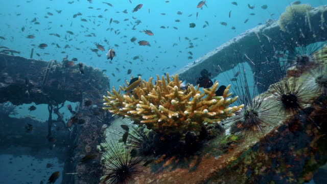 innovative environmental solution underwater eco tourism artificial coral reef - restoring stock videos & royalty-free footage