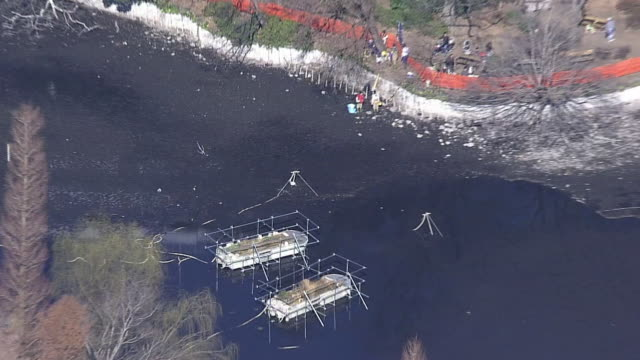 aerial, inokashira park, tokyo - pond stock videos & royalty-free footage