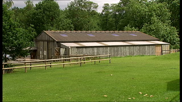 inquiry into e.coli outbreak at godstone farm: report published; three goats around picnic table animal barn int reporter to camera pig and piglets... - 身体症状点の映像素材/bロール