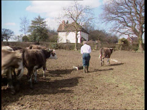 BSE inquiry RUSH Farmer along to trough in cow's field and emptying feed Feed into trough